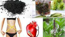 Công dụng chữa bệnh của hạt é